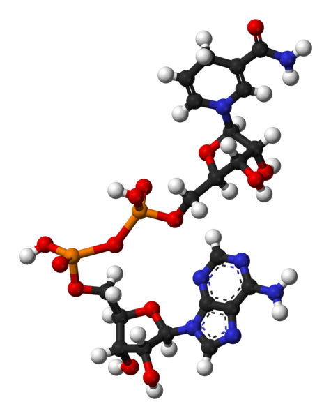 NADH molecule (image from Wikipedia)